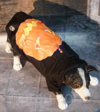 LED Hundepullover Halloween mit leuchtendem und blinkendem Kürbis