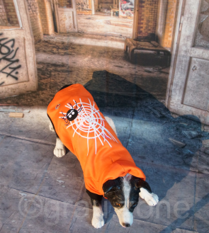 LED Hundebekleidung Hunde-Pullover Orange blinkende und leuchtende Hundemode mit Motiv Spinnennetz in den Größen S M L XL