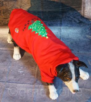 LED Hundepulli Weihnachten