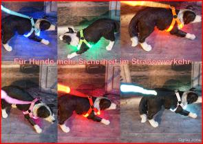 LED Hunde-Geschirr