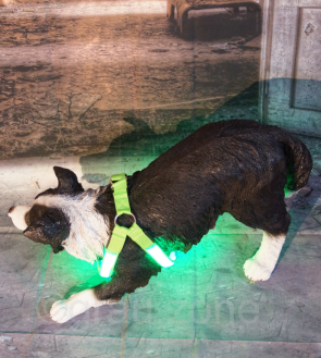 LED-Hundegeschirr