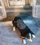 LEd Hundepullover Totenkopf Karo