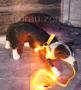 LED Hundegeschirr Gelb XL