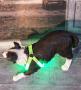 blinkendes Hundegeschirr Grün
