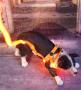 LED Hundegeschirr Orange L