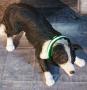 LED Hundehalsband Grün XS