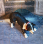 LED Hundehalsband Rot XS
