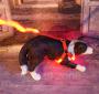 LED Hundegeschirr Rot S