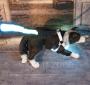 LED Hundegeschirr Weiß M